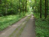 Waldweg aus der Unendlichkeit ...