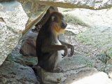 Diese Hitze macht sogar Affen zu schaffen