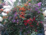Blütenpracht im Dezember