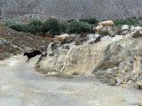 Wichtig: Beate ist kein schwarzes Schaf. Sie legt sich wirklich ins Zeug, was angesicht der Wetterlage nicht einfach ist.