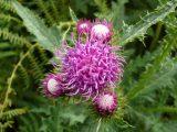 Blüten, soweit das Auge reicht