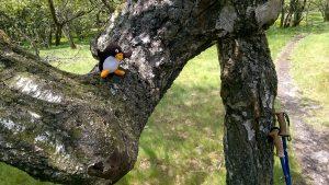 Pingu-Ole am Kleinen Feldberg