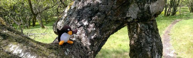 Pingu-Ole im Urlaub