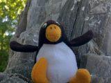 Pingu-Ole klettert