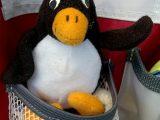 Da sitzt Pingu-Ole richtig gut